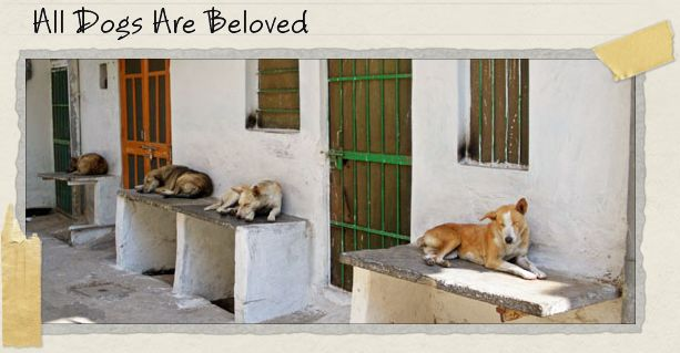 All Dogs Are Beloved
