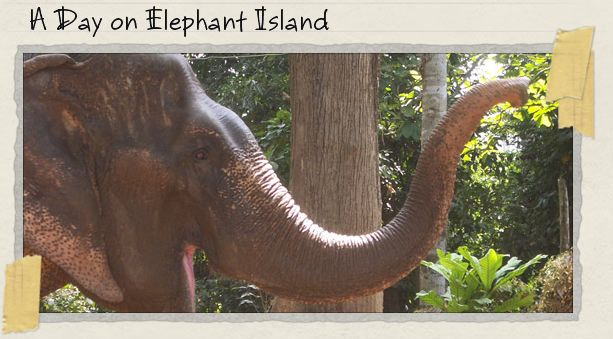 A Day on Elephant Island