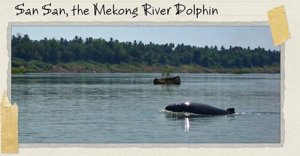 San San, the Mekong River Dolphin