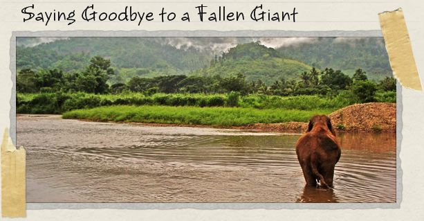 Saying Goodbye to a Fallen Giant