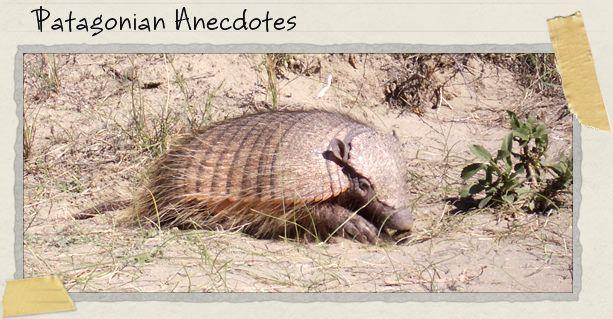 Patagonian Anecdotes