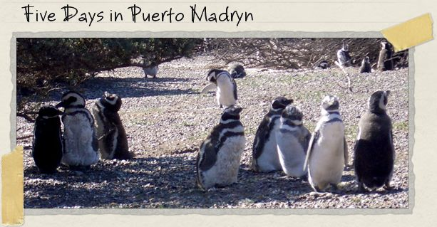 Five Days in Puerto Madryn