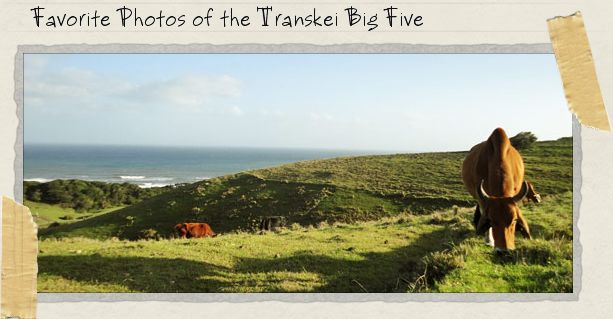 Favorite Photos of the Transkei Big Five