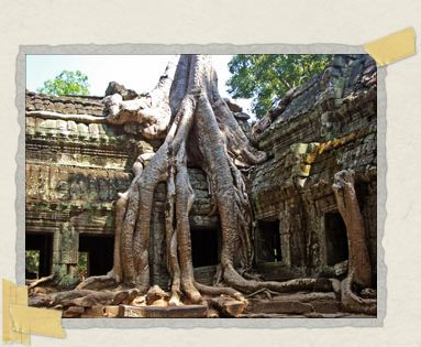'Strangler figs decorate the walls at Ta Prohm