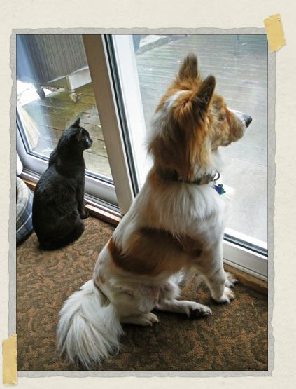 'At home in Cape Cod with his kitty sister China, watching some squirrels together