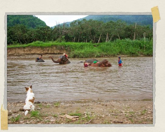 'Belly watches over Jessica (you can see her next to the green bucket in the middle of the photo) giving the eles a bath in the Mae Taeng River near the Park