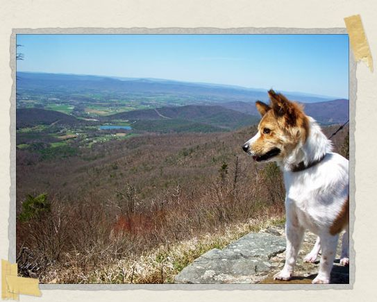 'Exploring the Shenandoah Mountains with mommy and daddy