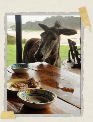 'A rain-moistened donkey joins us for breakfast