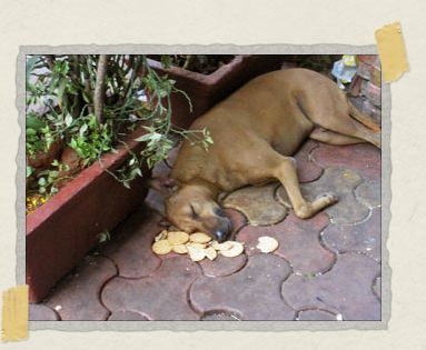 'This happy guy hung around the same area most days, and this particular morning had fallen asleep amongst his crackers