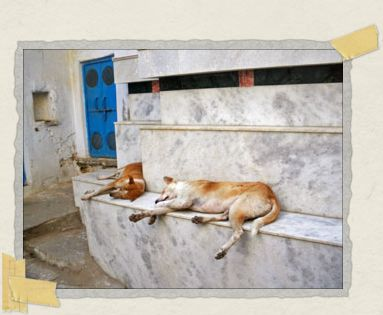 'Just another doggy day in India: sleeping in the shade