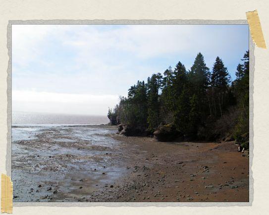 'Low tide!