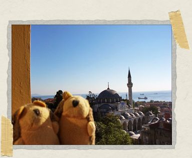 'Our little travel hedgehogs enjoying the view from our balcony in Istanbul, Turkey