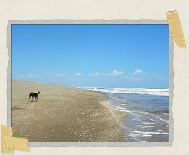 'Sea, surf, sky, sand dunes...and dogs!