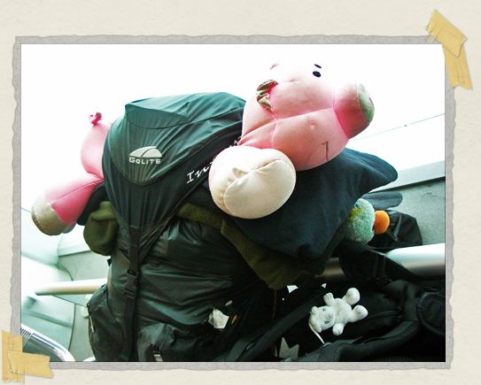 'Señor Pig, riding in his usual place atop Tim's backpack
