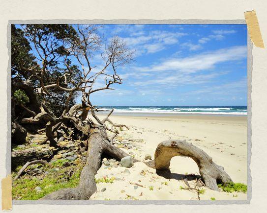 'Walking barefoot along the Wild Coast