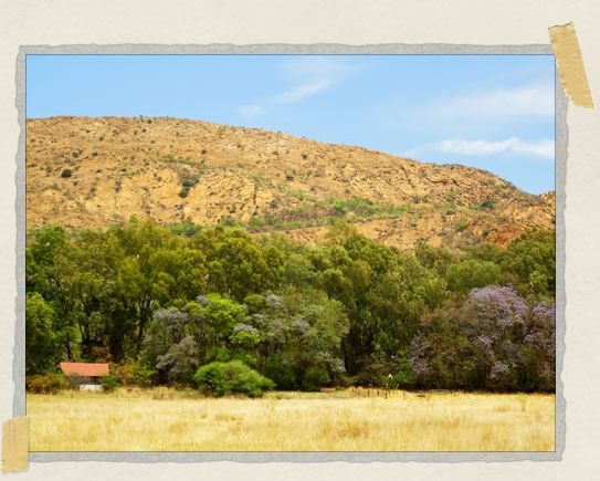 'Rainhill Farm, at the foot of the Magaliesberg Mountains