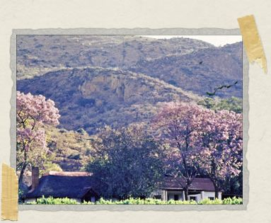 'A view of Rainhill Farm and the nearby Magaliesburg mountains, as taken by Tim's father, Alastair McGregor