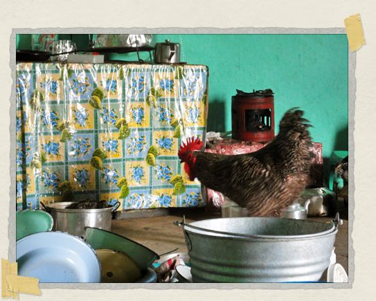 'Just your run of the mill rooster doing the dishes photograph