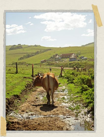 'The Transkei had stunning scenery. And cow bottoms.