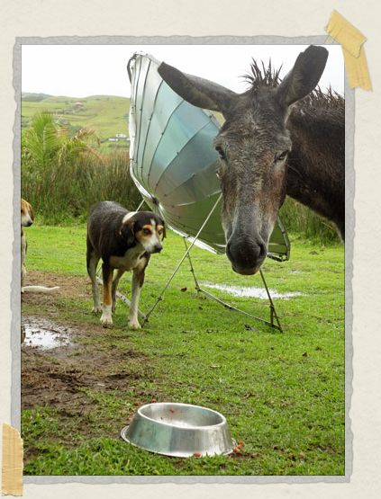 'This rather cheeky donkey helped himself to the dog's dinner!