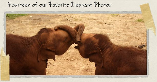 Fourteen of our Favorite Elephant Photos