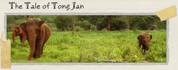 The Tale of Tong Jan