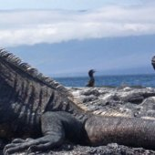 Eleven of our Favorite Galapagos Photos